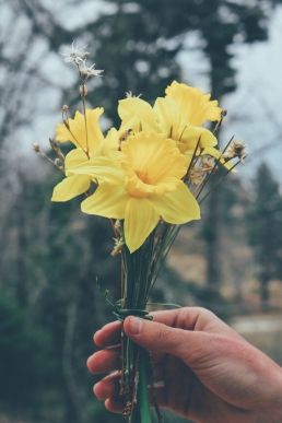 Mother's Day Daffodils