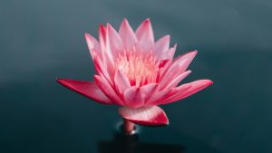 Love + Lotus Flow
